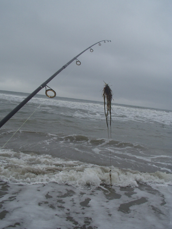 Zen fly fishing winter 2002 2003 surf gallery for Surf fishing northern california
